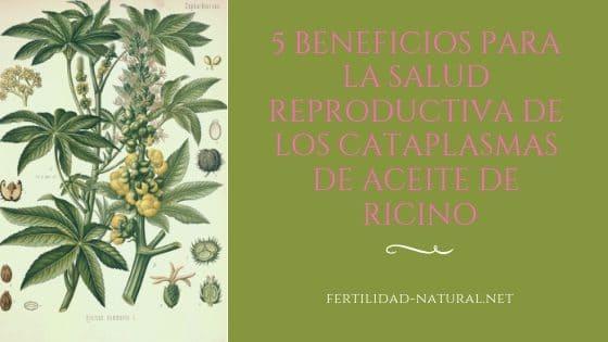 cataplasma aceite ricino fertilidad