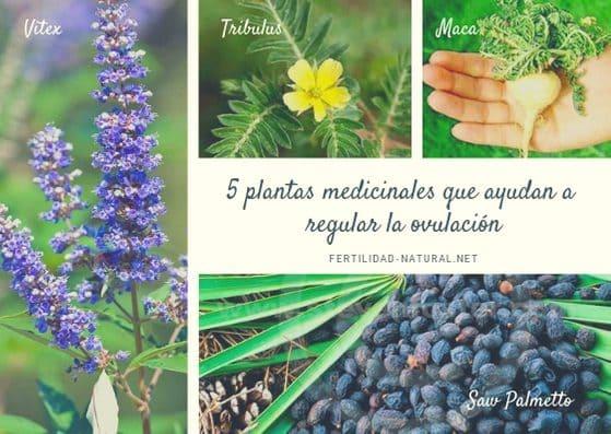 plantas medicinales regulan menstruación