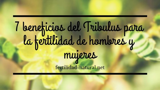tribulus fertilidad