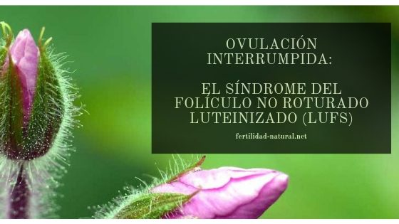 ovulacion lufs