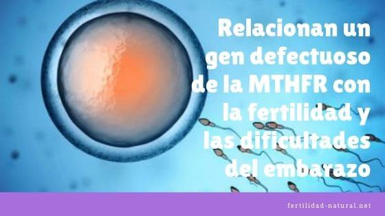 mthfr gen defectuoso fertilidad embarazo